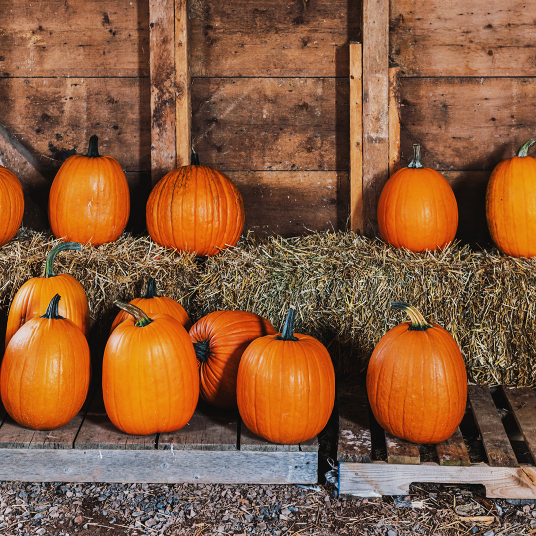 Our Top October Events in Frederick, MD-image