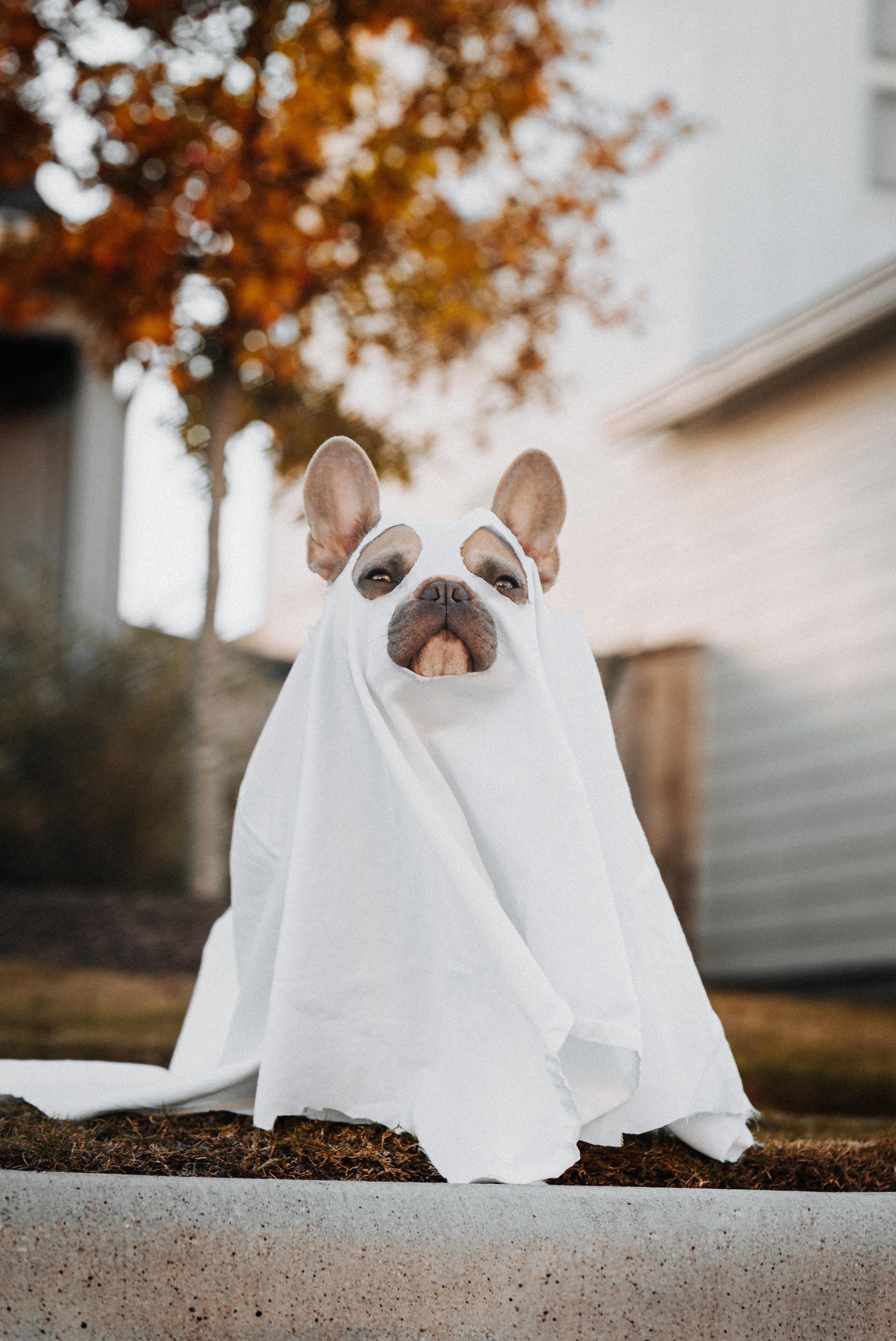 Pet Costume Ideas for Halloween 2021-image