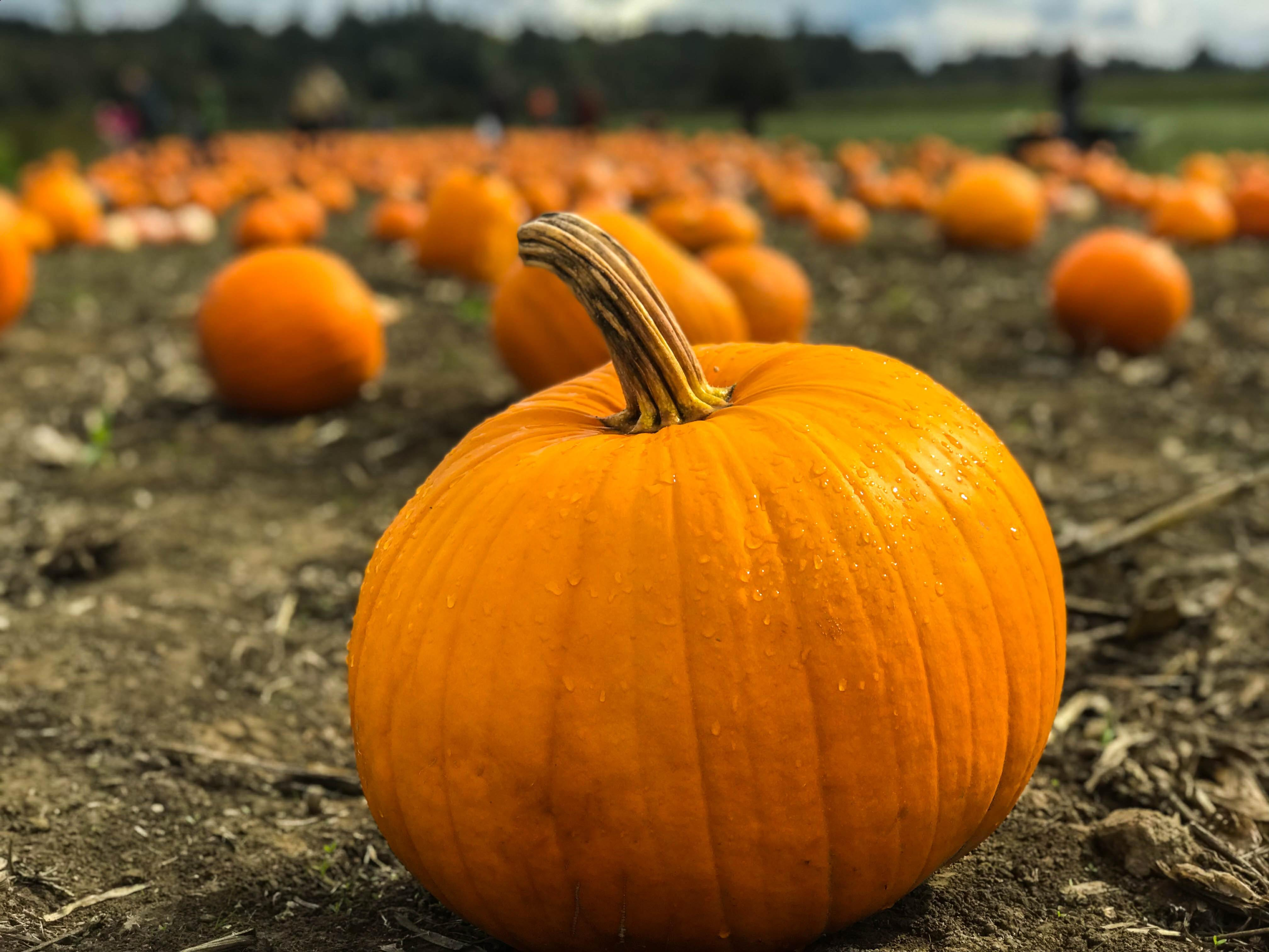 The Best Pumpkin Patches near Vancouver WA-image